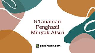 5 Tanaman Penghasil Minyak Atsiri