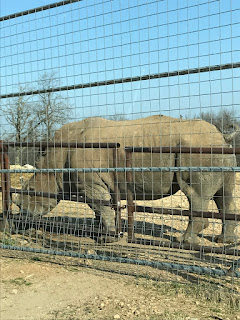 Rhinoceros at Wild Wilderness Drive Through Safari in Gentry, Arkansas