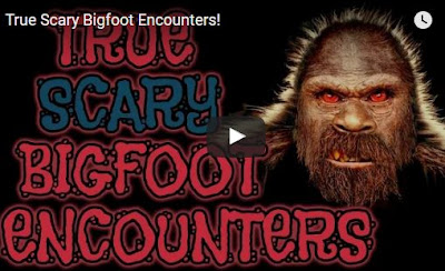 Bigfoot Encounters