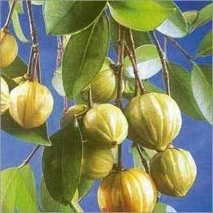 Slimbetti Garcinia Cambogia Extract A Natural Weight Loss