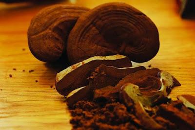 Nấm linh chi là thực phẩm bổ dưỡng dành cho người già