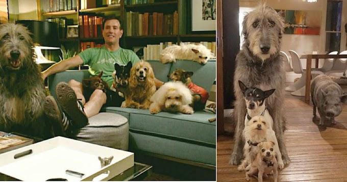 Hombre adopta a todos los animales viejos en un refugio
