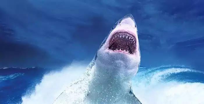 Στην Αυστραλία το 2020  οι καρχαρίες ξεπέρασαν  το ετήσιο ρεκόρ τους  για το πόσους ανθρώπους σκότωσαν