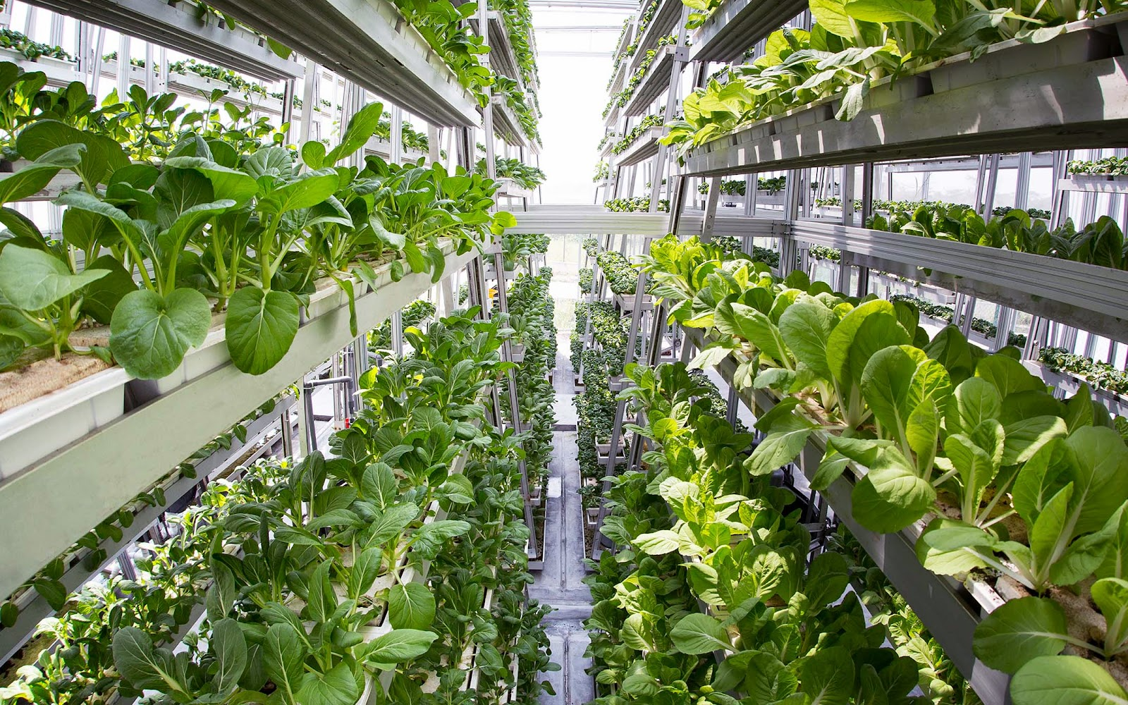 03-Sky-Greens-Vertical-Farms-for-a-new-Agricultural-Revolution-www-designstack-co