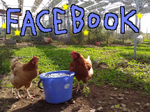 Chickens are on Facebook!