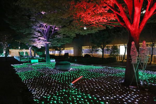 2014年 あべの・天王寺イルミナージュ <大阪 天王寺公園>