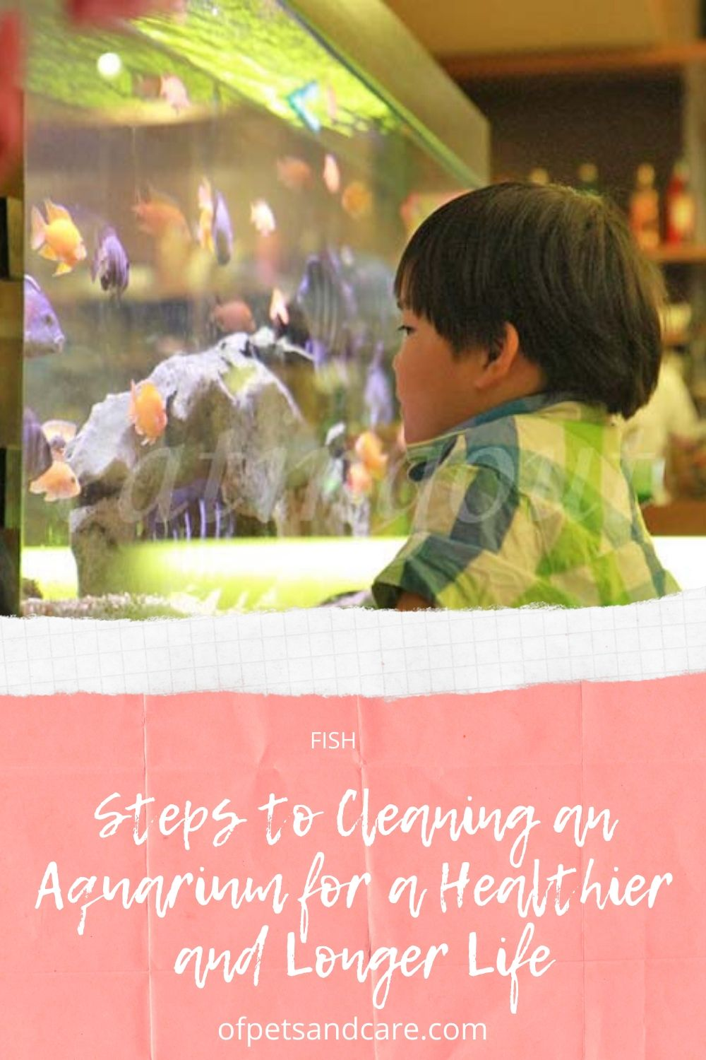 Steps to Cleaning an Aquarium for a Healthier and Longer Life