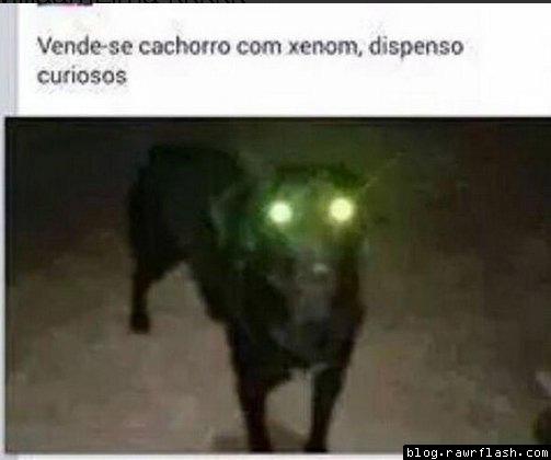 Vendendo Cachorro Xenom