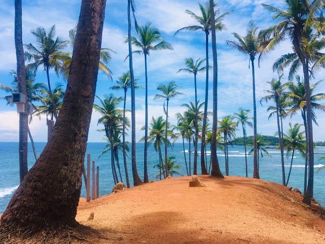 සුන්දර පොල්ගස් කන්ද හෙවත් පොල් රුප්පා කන්ද 🌴🌴🌊 (Coconut Tree Hill) - Your Choice Way