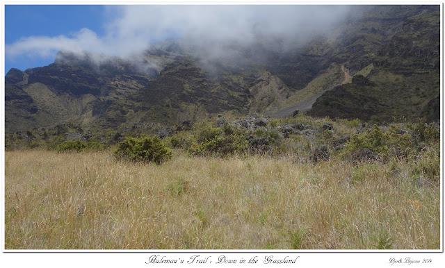 Halemau'u Trail: Down in the Grassland