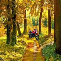 Green Forest Fun Escape