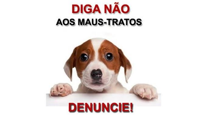 Morte de galinhas e cachorro vira caso de polícia em Araçatuba