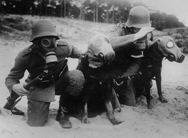 Korona'dan Önce: Gaz Maskesi Takan Köpekler