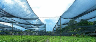 lưới chống nắng cho hoa hồng