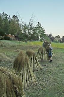 Victoria flax to linen harvest