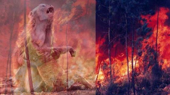 macaco queimado na Amazônia