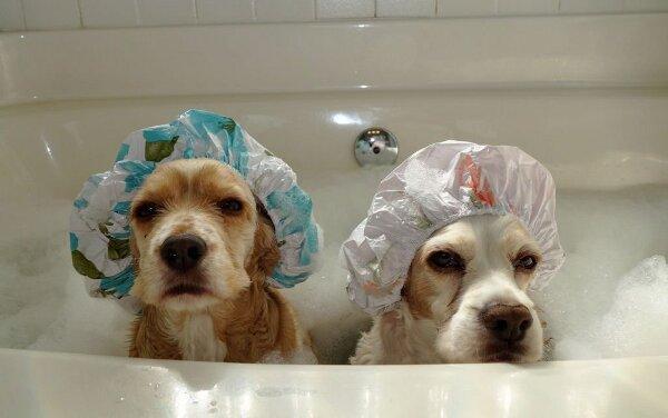 Lúc nào thì không nên tắm cho cún yêu