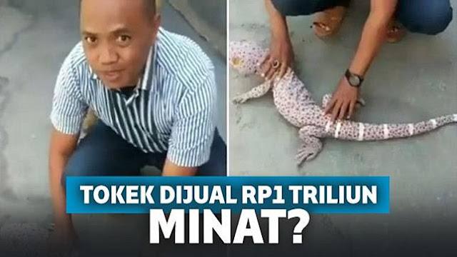 Viral Pria di Lombok Jual Tokek Ukuran Raksasa Rp1 Triliun