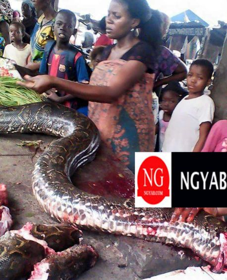 A Nigerian Market Where Women Sell Pythons As Meat