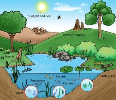 Contoh Ekosistem Alami dan Contoh Ekosistem Buatan