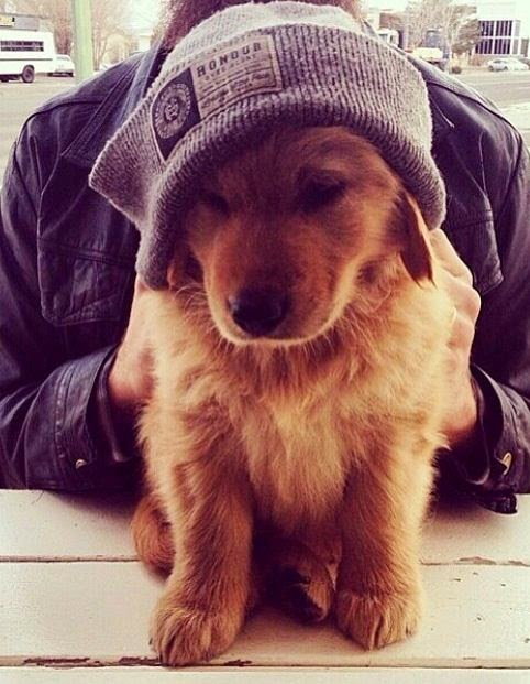 this is perfect aw. whats better than a fluffy puppy in a beanie? oh wait. nothing