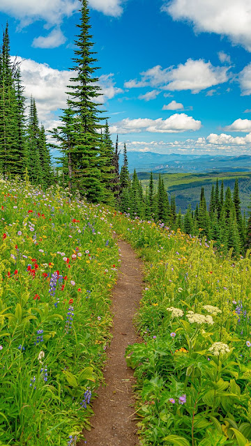 Landscape, mountains, path, trees, flowers, grass