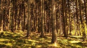 Perkembangan konsep hutan normal diawali pada abad ke 19 sejalan dengan konsep kelestarian yang kala itu ikut berkembang. Selanjutnya, perkembangan konsep hutan normal menjadi dasar dalam melakukan pengelolaan hutan. Pelaksanaan konsep hutan normal merupakan salah satu konsep yang mampu membuat bisnis di bidang kehutanan dapat mengurangi resiko degradasi yang berlebihan serta pengembalian modal pelaku bisnis secara bergilir.
