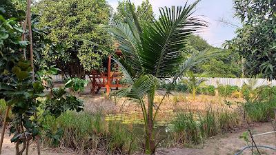 Gartenteich in Thailand