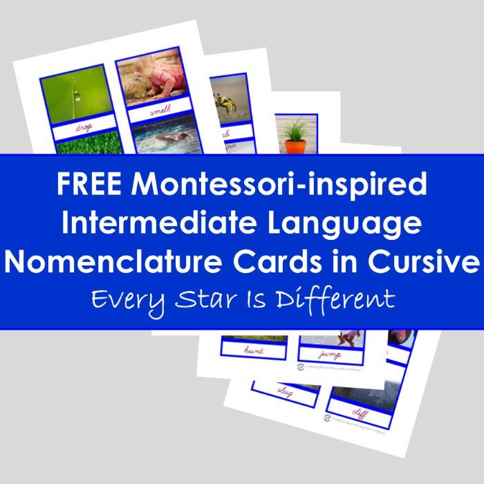 Intermediate Language Nomenclature Cards in Cursive