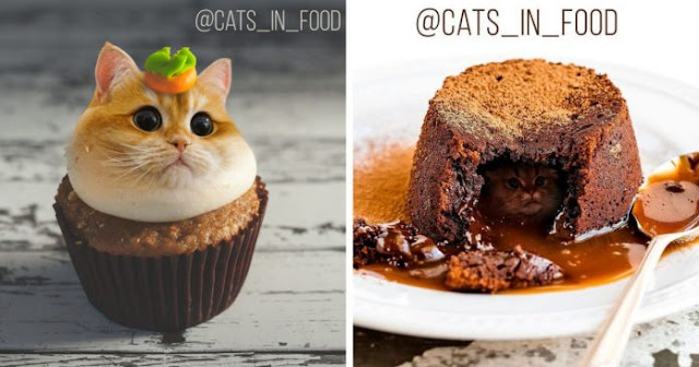 New Series Of The Combination Between Cats And Food