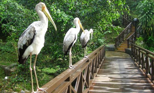 حديقة طيور - كوالالمبور
