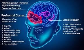 Prefrontal Cortex kya hai