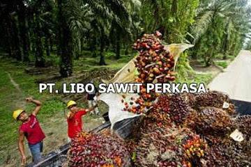 Lowongan Kerja PT. Libo Sawit Perkasa Pekanbaru Mei 2019