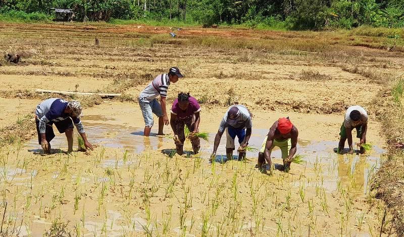 Korindo Ajari Masyarakat Papua Bercocok Tanam, Dukung Kemandirian Ekonomi