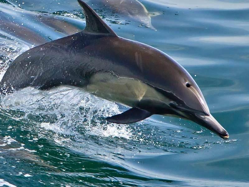 The Marine Biome Animals