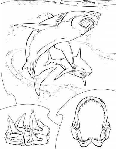 blog de geografia tubarão branco desenho para imprimir e colorir