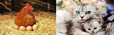 Ciri-ciri hewan bertelur dengan melahirkan