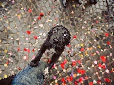 Маленький щенок фото