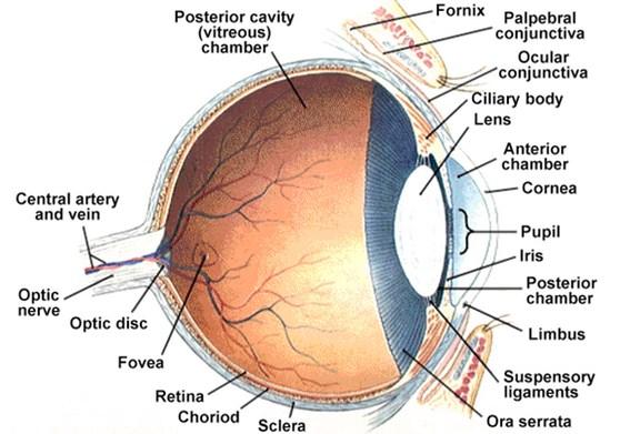 akut hyperopia a látástól való függés