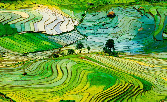 www.xvlor.com Sa Pa terraced rice fields are farming on slopes of Hoang Lien Son Mountains