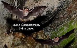twin bat-cave