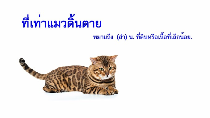ที่เท่าแมวดิ้นตาย หมายถึงอะไร ?
