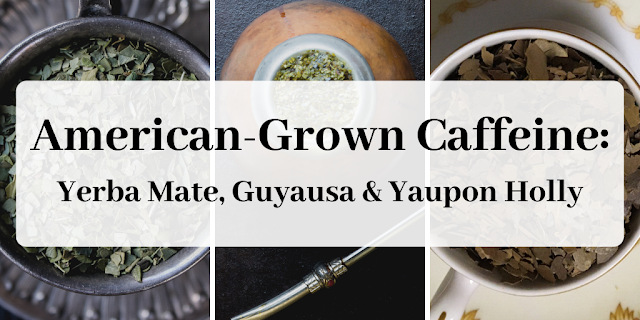 Yerba mate, Yaupon holly, guayusa
