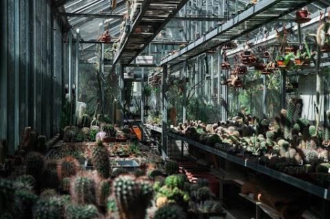 Botanická zahrada na Albertově, tak trochu jiný svět