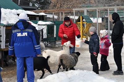 Контактный зоопарк. Челябинск. Февраль 2016