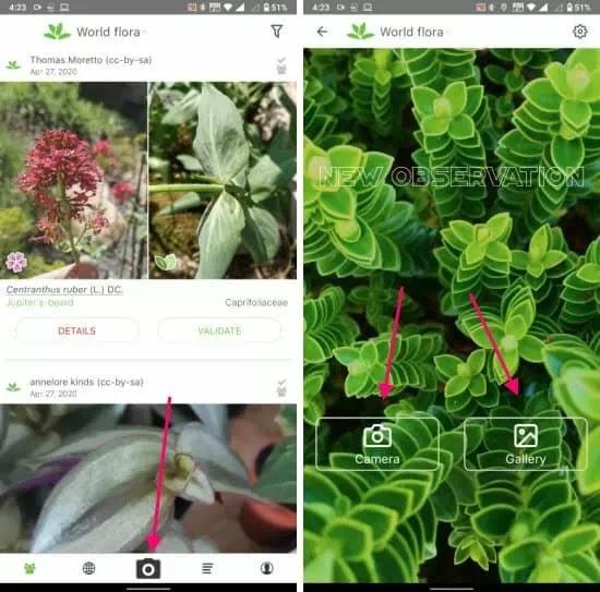 aplikasi untuk mengidentifikasi tanaman-1