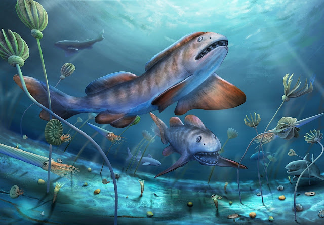 290-million-year-old shark with large petal-shaped teeth found in China for the first time