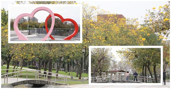《台中.南屯》豐富公園-黃花風鈴木花開,還有浪漫雙心造景可以約會拍美照