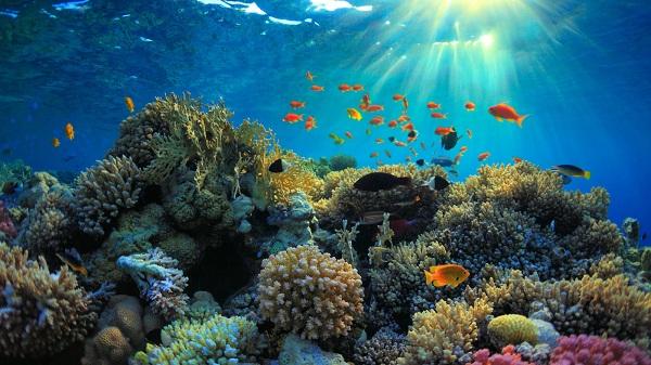 rạn san hô tại S.E.A Aquarium