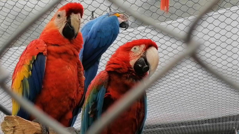 La CARDER lidera el traslado de 162 individuos de siete especies de fauna silvestre a Cartagena